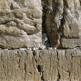 Pieces of Paper with Written Prayers Placed in the Wailing Wall by Pious Jews Photographic Print
