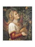 Angel Musician Giclee Print by Melozzo Da Forli