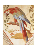 A Parrot Giclee Print by Pietro Rotati