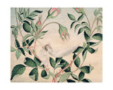 A Fairy Resting in a Hammock Spun from Cobweb, 1827-29 Giclee Print by Amelia Jane Murray