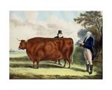 Portrait of Mr T.W. Coke Esq. and Clerk Hilliard Esq. with a North Devon Ox Giclee Print by W.H. Davis
