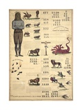 Chronological Chart of the Visions of Daniel and John, 1843 Giclee Print
