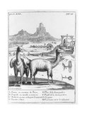 Llamas and Diagrams Concerning Mineral Extraction, from 'Relation Du Voyage De La Mer Du Sud Aux… Giclee Print