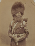 Colour-Sergeant Macgregor, Scotch Fusiliers Guards Photographic Print by  Joseph Cundall and Robert Howlett