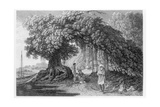 A Banyan Tree, from 'travels in India in In the Years 1780-83' by William Hodges, Engraved by… Giclee Print by William Hodges