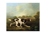 A Pointer Giclee Print by George Stubbs