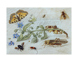 A Study of Insects Giclee Print by Jan Van, The Elder Kessel