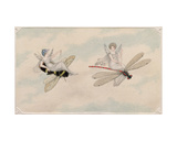 Two Fairies Flying Through the Air, One Seated on a Bee and the Other on a Dragonfly, 1817-29 Giclee Print by Amelia Jane Murray