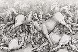 Group of Seven Wild Horses, 1534 Photographic Print by Hans Baldung Grien