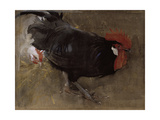 The Black Cock Giclee Print by Joseph Crawhall