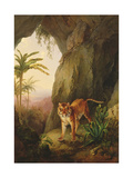 Tiger in a Cave, C.1814 Giclee Print by Jacques-Laurent Agasse