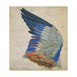 Wing of a Blue Roller, Copy of an Original by Albrecht Durer of 1512 Giclee Print by Hans Hoffmann