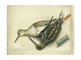 Snipe and Redshank, 1872 Giclee Print by Claude Conder