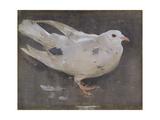 Le pigeon Reproduction procédé giclée par Joseph Crawhall