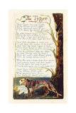 'The Tyger', Plate 41 from 'Songs of Experience', 1794 Lámina giclée por William Blake