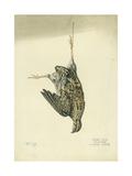 Quail, 1872 Giclee Print by Claude Conder
