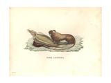 Simia Leonina Giclee Print by Friedrich Alexander Humboldt