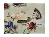 Still Life, Detail of Insects Giclee Print by Ferdinand van Kessel
