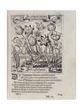 Tulips, from a Book on Botany, 1646 Giclee Print by Mattaus The Younger Merian
