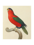 Purple-Naped Lory Giclee Print by Jacques Barraband