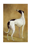 Study of a Greyhound Giclee Print by Jacques-Laurent Agasse