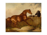Stallion and Mare Giclee Print by Thomas Woodward