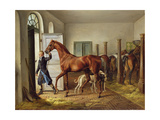 Groom Leading a Horse from the Stable, 1827 Lámina giclée por Albrecht Adam