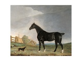 A Dark Bay Horse and a Terrier in a Landscape Giclee Print by Edwin Cooper