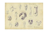 Idols from Mr Shapira's Collection, Plate 7, 1872 Giclee Print by Claude Conder