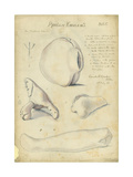 Phallic Emblems, Mr Shapira's Collection, Plate 5, 1872 Giclee Print by Claude Conder