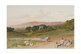 The Turnip Field Giclee Print by Robert Hills