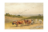 Oxen Ploughing a Downland Field Giclee Print by Robert Hills