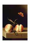 Still Life with Peaches Giclee Print by Adrian Coorte