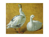 Study of Geese Giclee Print by Alexandre-Francois Desportes