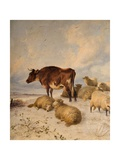 Cows and Sheep in Snowscape, 1864 Giclee Print by Thomas Sidney Cooper