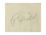 A Horse Grazing Giclee Print by Sawrey Gilpin