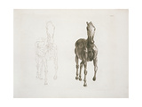 Tab. Viii, from 'The Anatomy of the Horse...' 1766 Giclee Print by George Stubbs