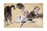 Four Studies of Kittens Giclee Print by Alexandre-Francois Desportes