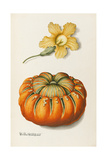 Courgette and a Pumpkin Giclee Print by Joseph Jacob Plenck