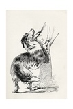 Half Bred Shepherd Dog Caressing His Master, from Charles Darwin's 'The Expression of the… Giclee Print by  Mr. A. May