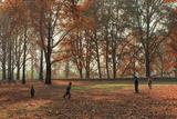 Children Playing under Huge Chenar Trees in Autumn, Nishat Bagh, Srinagar Photographic Print