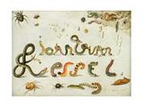 Garden and Other Spiders, Caterpillars Spell the Artist's Name, 1657 Giclee Print by Jan Van, The Elder Kessel