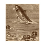 19th Century Illustration of a Man Rescuing a Swimmer with a Shark in the Background Giclee Print