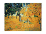 The Park at St. Paul's Hospital, St. Remy, 1889 Giclee Print by Vincent van Gogh