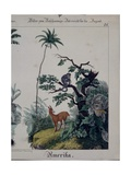 Educational Poster Featuring Flora and Fauna of South America, Right Side, Published by F.… Giclee Print by German School