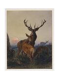 A Stag with Deer in a Wooded Landscape at Sunset, 1865 Giclee Print by Charles Jones
