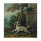 Zaza, the Dog, C.1730 Giclee Print by Jean-Baptiste Oudry