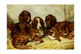 Shot and His Friends - Three Irish Red and White Setters, 1876 Giclee Print by John Emms