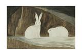 Arctic Hares, C.1829-33 Reproduction procédé giclée par Sir John Ross