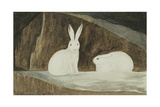 Arctic Hares, C.1829-33 Giclee Print by Sir John Ross